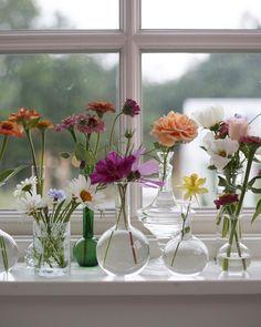 Juniblommor i mitt fönster. 💕