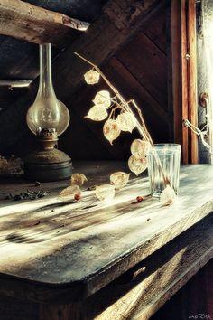 Старая дача и ее старые дачники