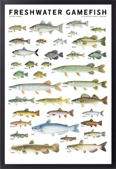1000 images about fishing on pinterest trout fish and for Freshwater fishing in massachusetts