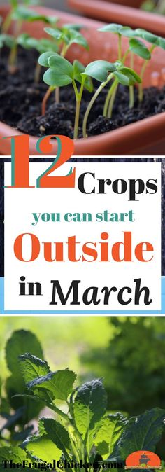 Itching to get started on your spring garden? There ARE some crops you can start growing outside in March. Here's 12 to get you started! vegetable garden What Seedlings You Can Start In March [Planting Guide] Growing Plants, Growing Vegetables, Growing Spinach, Growing Tomatoes In Containers, Spring Garden, Lawn And Garden, Gravel Garden, Potager Garden, Veggie Gardens