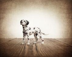 Fire Dog Photo Print