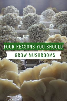 Four Reasons You Should be Growing Your Own Mushrooms - Mossy Creek Mushrooms Grow Your Own Mushrooms, Growing Mushrooms At Home, Chicken Garden, Chicken Coops, Compost Tea, Urban Chickens, Good Source Of Fiber, Square Foot Gardening, Organic Gardening