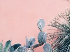*~* // dying over these colors! // Cacti, Hortus Botanicus Amsterdam by Janneke Luursema