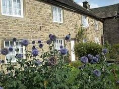 The Great Plague arrived from London at the Derbyshire village of Eyam in a parcel of cloth infested with fleas. Black Death, Derbyshire, Beautiful World, London, Landscape, Plants, Cottages, Future, Google Search