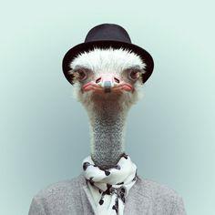 Fashion Zoo Animals