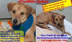 """As a person who's pets are family I think this is ridiculous. """"D.C. couple have been forced to take down posters seeking help finding their missing rescue dog after police threatened them with $750,000 in fines, reports NBC4."""" https://www.facebook.com/FindOllieDC/ #FindOllie #washingtondc #lostdog #missingpet #fliers #lostandfoundpets #lostpet #Washington #DC #missingdog"""