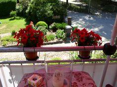Petunien und Aschenbecher