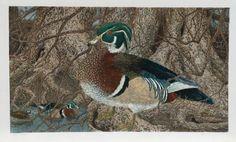 Wood Duck...Janet Turner