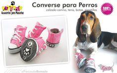 Zapatos converse para perros