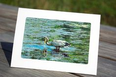 51/8 x 7 Blank Photo Greeting Cards with by Stormysphotography