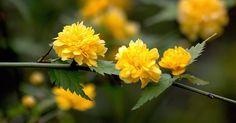 Te recomendamos este arbusto para una explosión de color y belleza