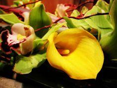 Flower/ MsCarlaGiova