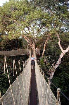 Amazon Rainforest Canopy Walkway