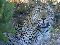 Private Safaris Teamausflug Südafrika 2015