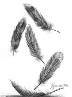 Feathers For A Friend Drawing - Feathers For A Friend Fine Art Print