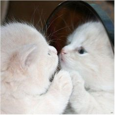 These cats, however, not only notice mirrors, they have a myriad of reactions from fear to anger to curiosity and everything in between. A definite must watch for cat lovers and funny cat video lovers!