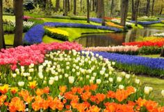Keukenhof Gardens in the Netherlands. Keukenhof is affectionately known as the world's largest flower garden with over 7 million bulbs planted every year.