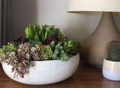 Succulent Garden Outdoor Bed 54 Ideas For 2020 Succulent Outdoor, Succulent Bowls, Succulent Landscaping, Succulent Centerpieces, Succulent Terrarium, Succulent Ideas, Succulents In Containers, Cacti And Succulents, Planting Succulents