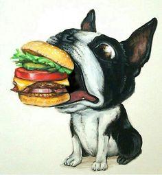 ボストンテリア×ハンバーガー
