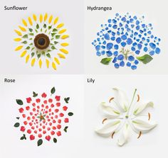 deconstructing flowers - inspiration from 'exploded flowers' by qi wei fong
