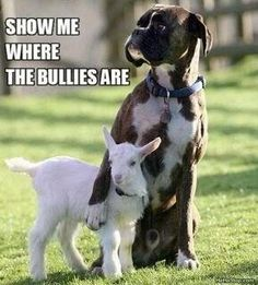 Show me the bullies.  Awe.