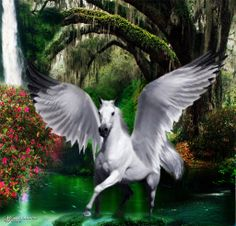 images of unicorns and pegasus | Advanced ' Photo Effects Contests
