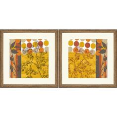 Framed Graphic Floral Study  Wall Art, 18 inch x 18 inch, Set of 2, Multicolor