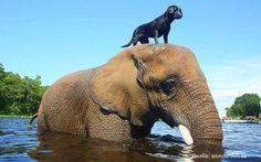 ɱ magnet magazin ausergewöhnliche tierfreundschaften tiere gefühle freundschaft artenvielfalt elefant hund