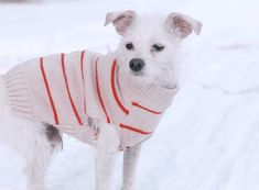While you're bundling up, remember to keep your pup warm with these 7 dog outerwear options that will keep your pet safe, toasty, dry and adorable!