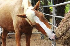 Haynets with small openings reduced adult horses' dry matter intake rates and extended foraging time, researchers found.