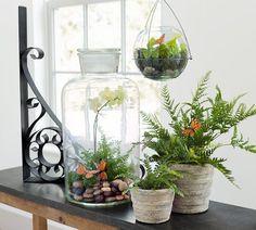 Clear Glass Terrarium Jar
