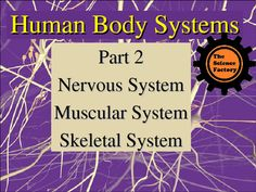 Primary Learning Objective: To know the functions of the nervous, muscular, and skeletal systems.Note: There is a Student version Human Body Systems Part 2 Notes Word Document for sale in my store that goes along with this PowerPoint that can be used as scaffolded notes.