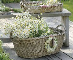 Basket of daises