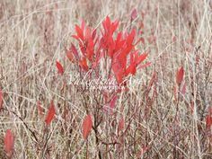 The Red of Fall Shenandoah VA Art Color by ValentinaArtSpace