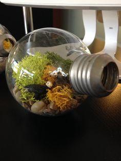 How to make a Lightbulb Terrarium, with Juliette Melton!
