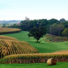Rolling hills of Iowa.  Where Grant Wood got his ideas for painting.