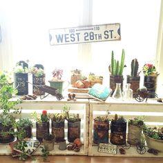yoo_72さんの、リビング,植物,サボテン,green,出窓,多肉植物,洋書,日光浴,リメ缶,日当たり良好,halさんのパネル,出窓のグリーンコーナー,のお部屋写真
