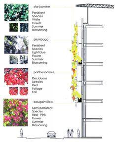 concorcio-planting1