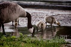 Thirsty Family' by Jeff Folger