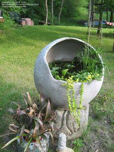 "Wow, hypertufa water garden made by ""greyma"" on Dave's Garden . . . I want one!"