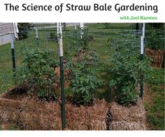 The Science of Straw Bale Gardening