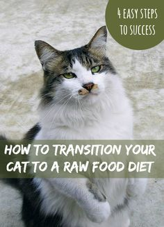 A raw food diet has many benefits for cats - we outline four stages to successfully transition your cat from the 24/7 kibble buffet to raw | How to Transition Your Cat to a Raw Food Diet