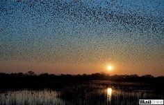 birds in flight sunset - Google Search