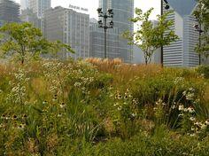 Piet Oudolf - Lurie garden, Chicago