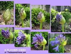 A week in the life of a flower at - TheSeasonalHome.com
