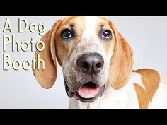Animal Shelter Stunning Photo Booth Pictures to Help Find Loving Forever Homes for Dogs (VIDEO) | One Green Planet