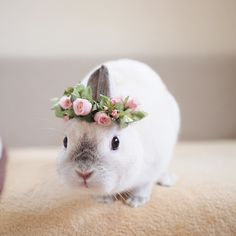 So cute with his ears smished together and that little rose crown is just adorable! Animals And Pets, Baby Animals, Cute Animals, Cute Bunny, Bunny Rabbit, Easter Colors, Guinea Pigs, Animal Photography, Creatures