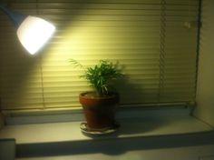 Cameron Bozel: let the light in.