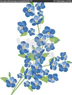 forget-me-not-flowers-cacf26.jpg (923×1210)