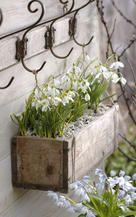 Decoration ideas with snowdrops- Deko-Ideen mit Schneeglöckchen Snowdrops in a wooden box - Garden Cottage, Garden Pots, Vegetable Garden, Container Plants, Container Gardening, Pot Jardin, Dream Garden, Garden Projects, Spring Flowers